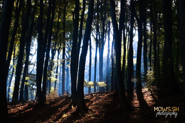 Chladný les v Malých Karpatoch