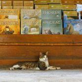 kníhkupectvo u kocúra