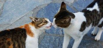 Mačacie rande