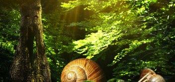 Tajomný les